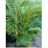 Проблемы выращивания комнатных растений. Часть 2.