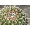 Мифы, погубившие не одну сотню кактусов
