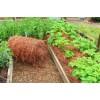 Здоровый огород без химии