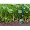 Выращивание осеннего редиса