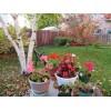 Календарь садово-огородных работ на октябрь