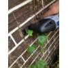 Как снять вьющиеся растения с фасада?