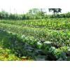 8 неприхотливых огородных культур