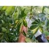 Как навести блеск на листьях комнатных растений
