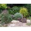 Ориентированное на водоём оформление сада