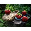 Клонирование земляники садовой (клубники)