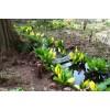 Растения для сырых и болотистых участков