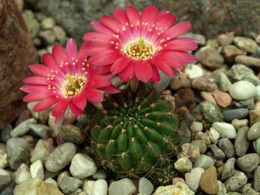 Каталог комнатных цветов - Floral-City