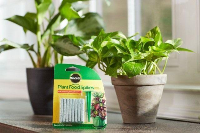 Удобрения длительного действия для комнатных растений